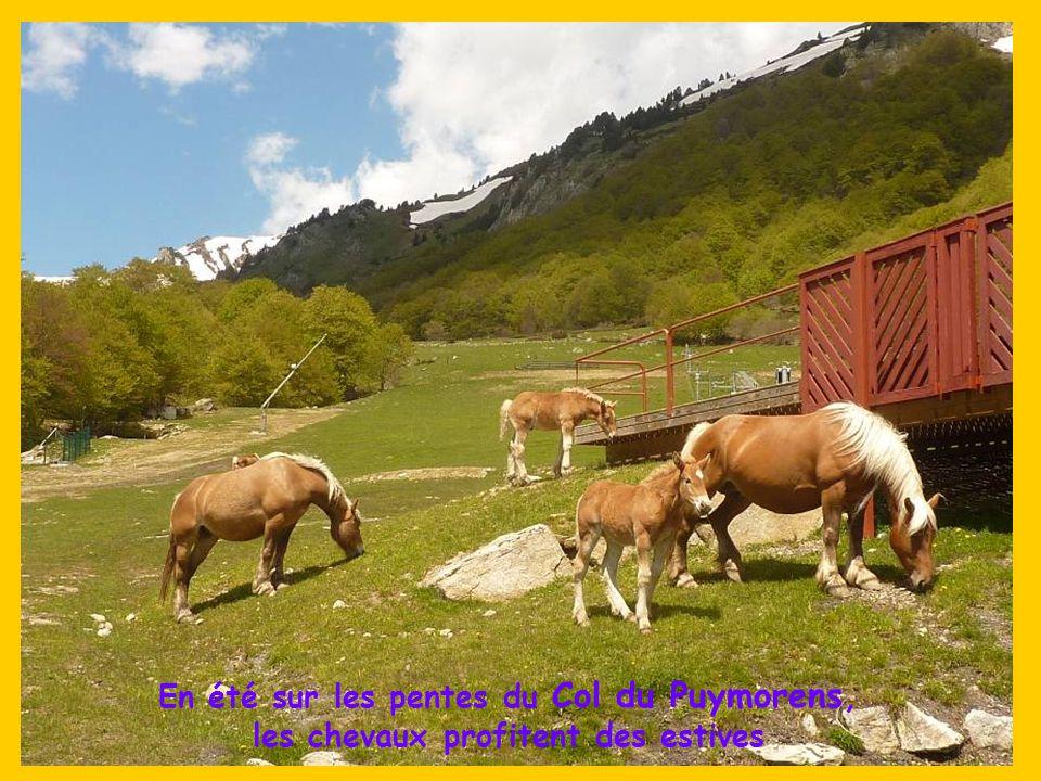 Dans cette Cerdagne au pied du pic Carlit du massif du Capcir, « la Bollosa », le lac artificiel des Bouillouses a été construit en 1903 pour fournir