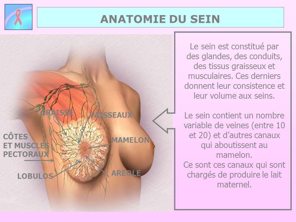 ANATOMIE DU SEIN CÔTES ET MUSCLES PECTORAUX Le sein est constitué par des glandes, des conduits, des tissus graisseux et musculaires. Ces derniers don