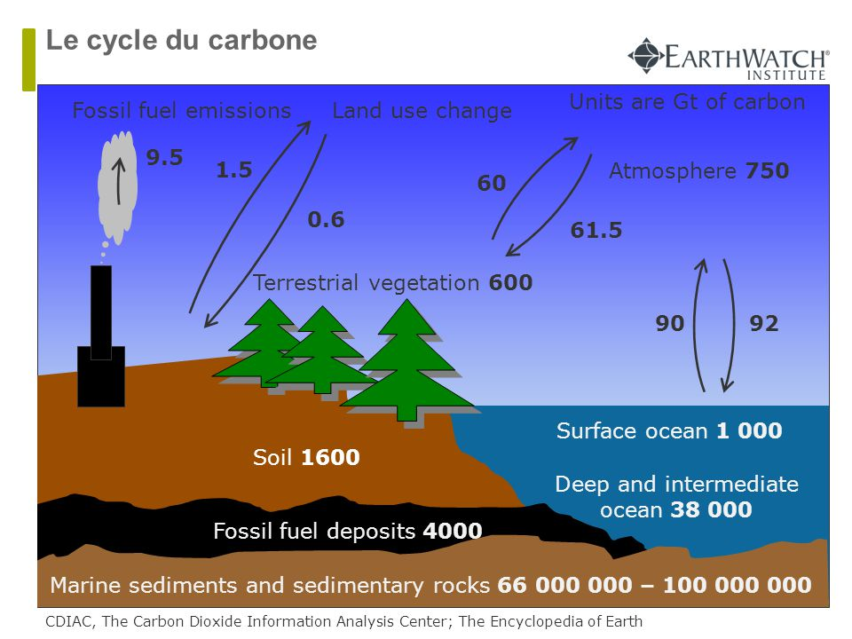 Soil 1600 Fossil fuel deposits 4000 Terrestrial vegetation 600 Atmosphere 750 Marine sediments and sedimentary rocks 66 000 000 – 100 000 000 Deep and