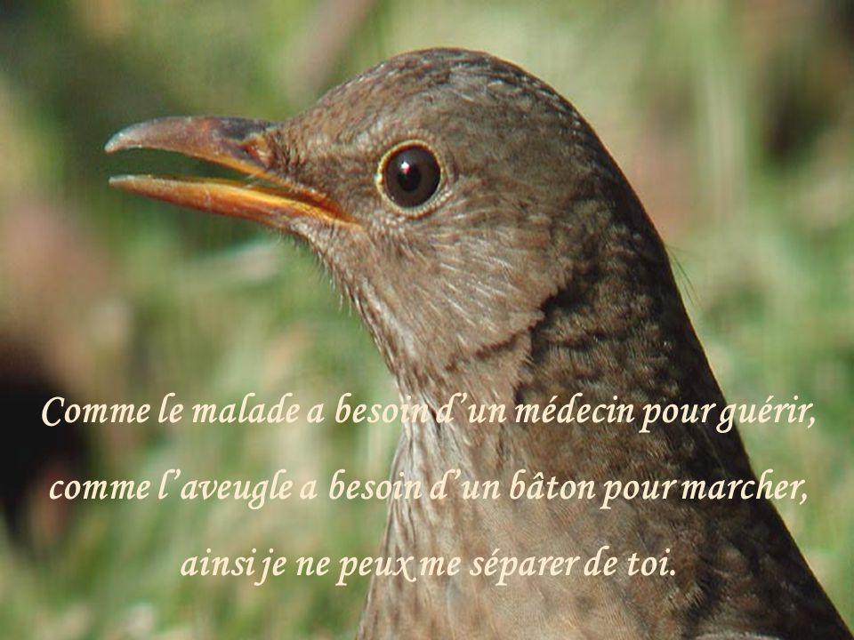 Seigneur, comme l'oiseau a besoin d'un nid, ainsi je te désire.