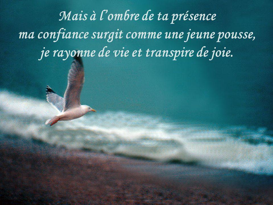 Mais à l'ombre de ta présence ma confiance surgit comme une jeune pousse, je rayonne de vie et transpire de joie.