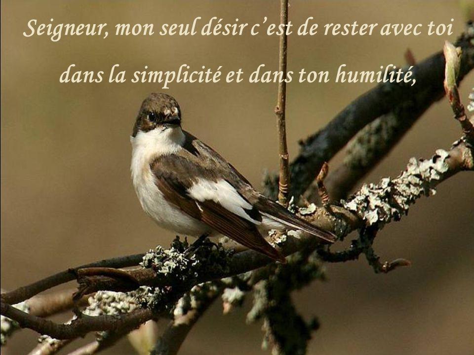 Seigneur, mon seul désir c'est de rester avec toi dans la simplicité et dans ton humilité,
