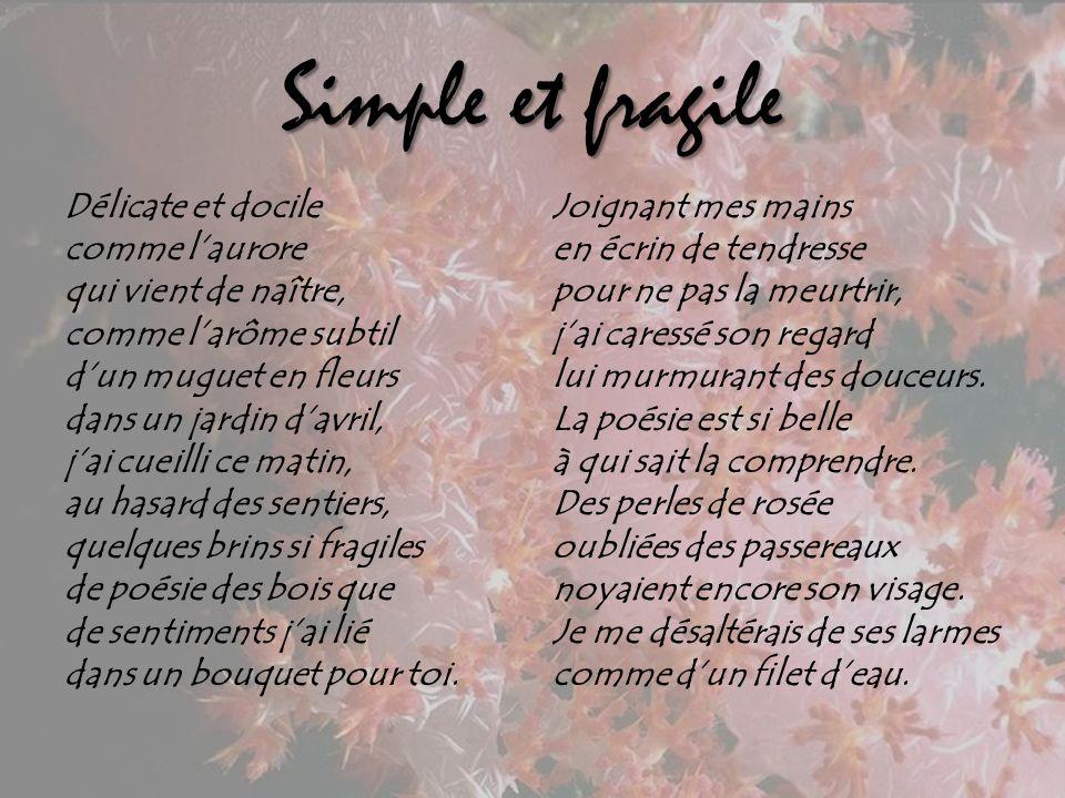 SIMPLE ET FRAGILE Poème de Robert Serge Hanna