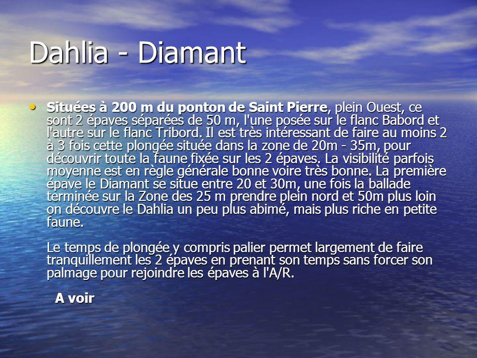 Dahlia - Diamant Situées à 200 m du ponton de Saint Pierre, plein Ouest, ce sont 2 épaves séparées de 50 m, l'une posée sur le flanc Babord et l'autre