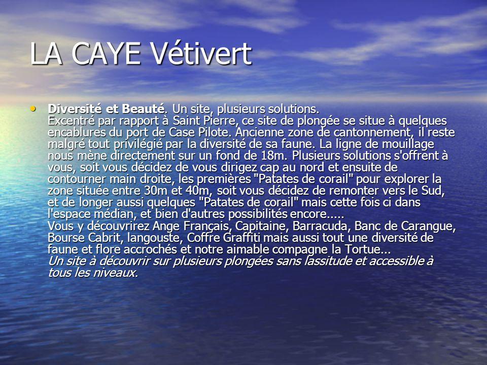 LA CAYE Vétivert Diversité et Beauté. Un site, plusieurs solutions. Excentré par rapport à Saint Pierre, ce site de plongée se situe à quelques encabl