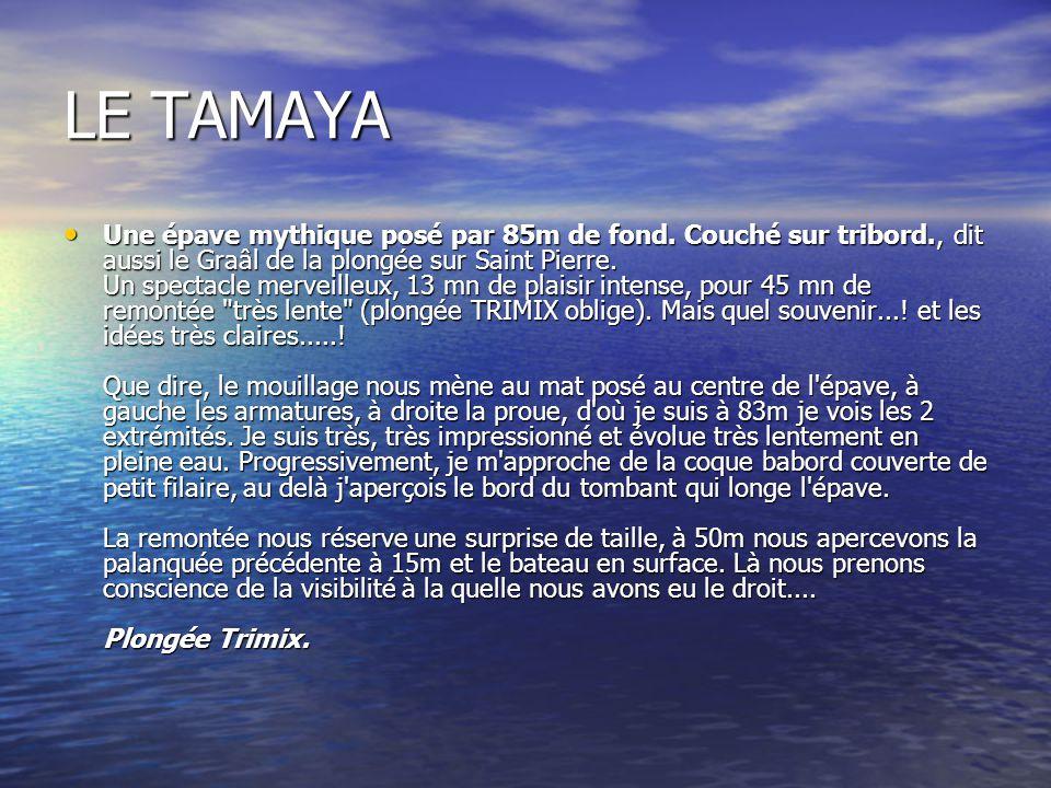 LE TAMAYA Une épave mythique posé par 85m de fond. Couché sur tribord., dit aussi le Graâl de la plongée sur Saint Pierre. Un spectacle merveilleux, 1