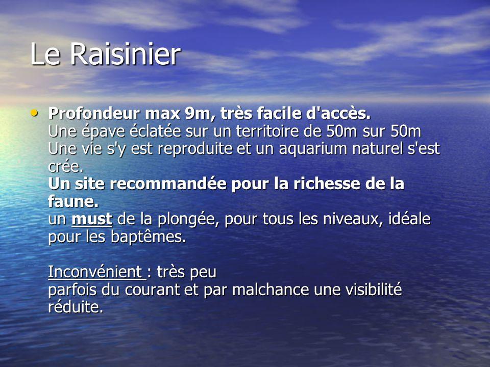 Le Raisinier Profondeur max 9m, très facile d'accès. Une épave éclatée sur un territoire de 50m sur 50m Une vie s'y est reproduite et un aquarium natu