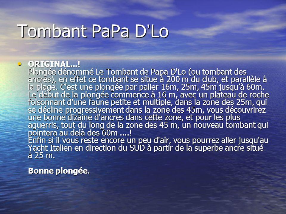 Tombant PaPa D ' Lo ORIGINAL...! Plongée dénommé Le Tombant de Papa D'Lo (ou tombant des ancres), en effet ce tombant se situe à 200 m du club, et par