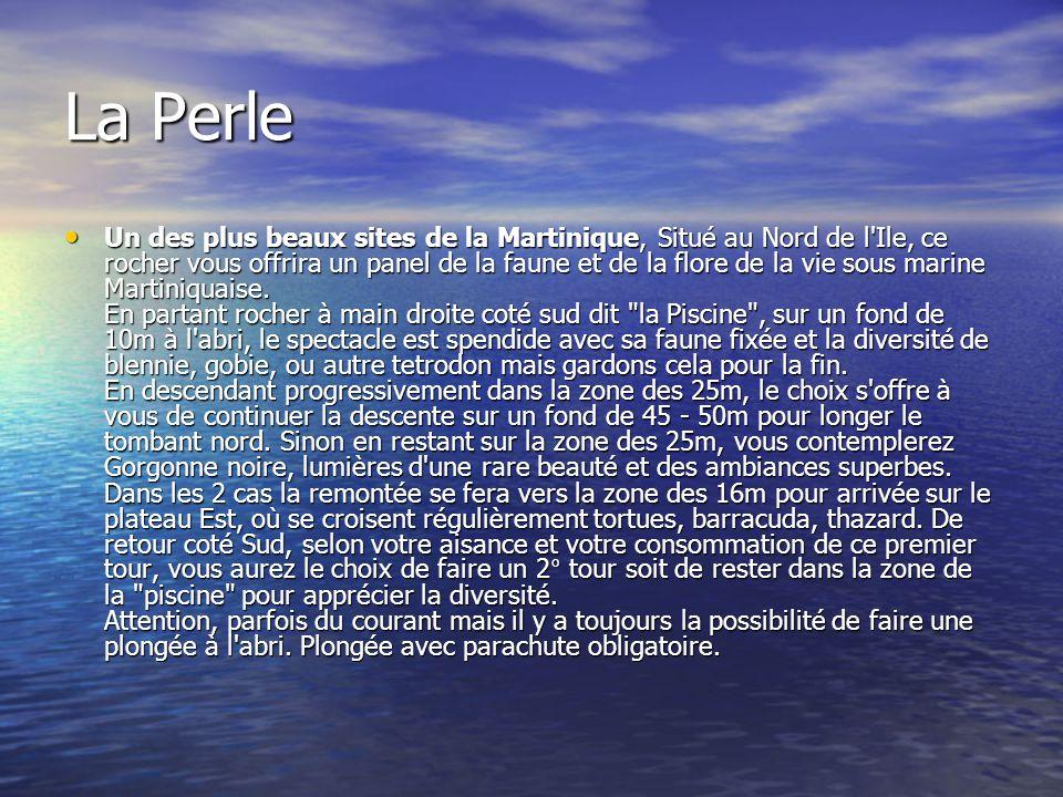 La Perle Un des plus beaux sites de la Martinique, Situé au Nord de l'Ile, ce rocher vous offrira un panel de la faune et de la flore de la vie sous m