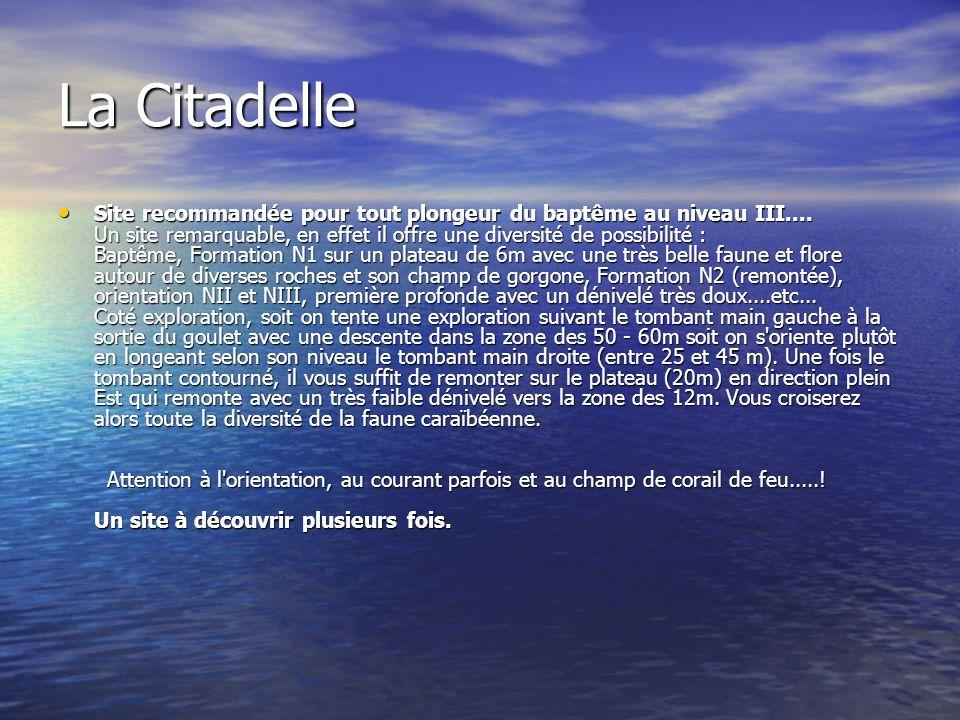La Citadelle Site recommandée pour tout plongeur du baptême au niveau III.... Un site remarquable, en effet il offre une diversité de possibilité : Ba