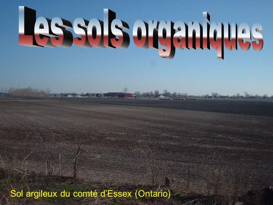 Sol argileux du comté d'Essex (Ontario)