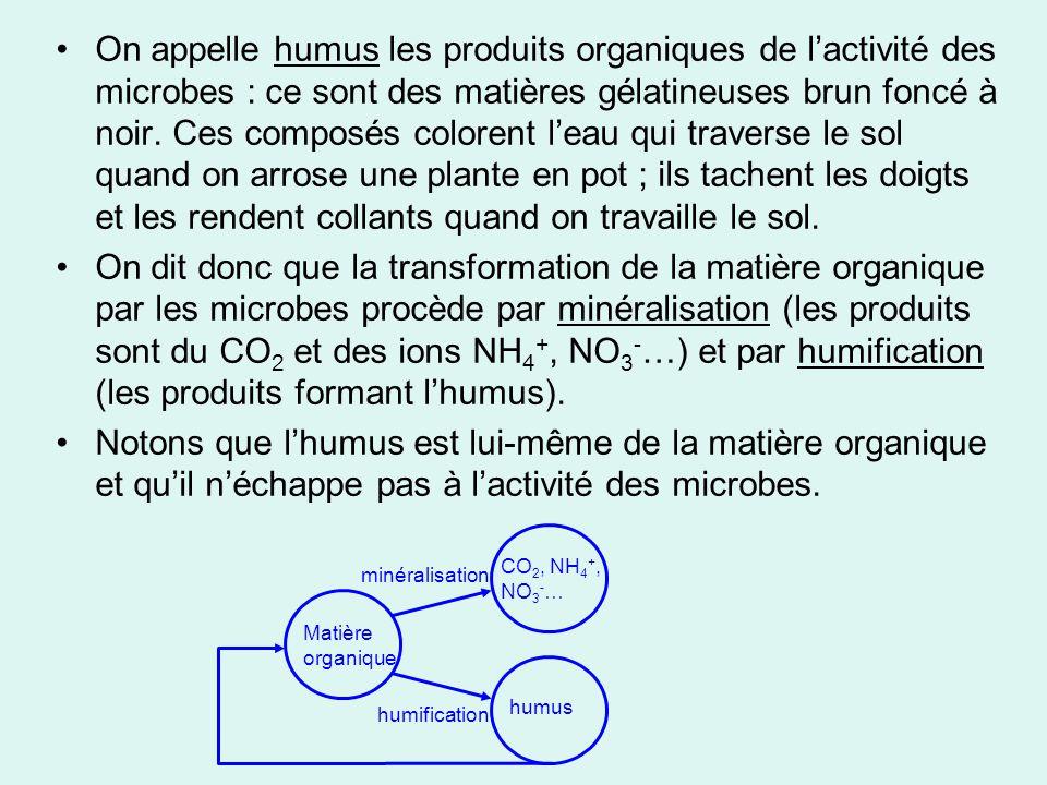 On appelle humus les produits organiques de l'activité des microbes : ce sont des matières gélatineuses brun foncé à noir. Ces composés colorent l'eau