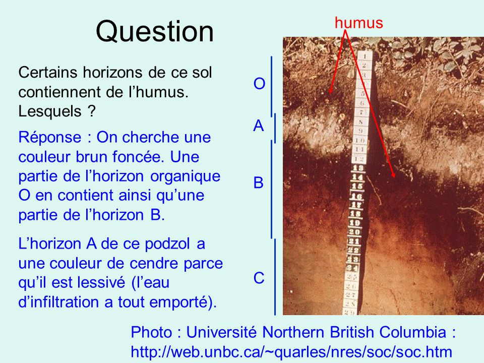 Question Photo : Université Northern British Columbia : http://web.unbc.ca/~quarles/nres/soc/soc.htm Certains horizons de ce sol contiennent de l'humu