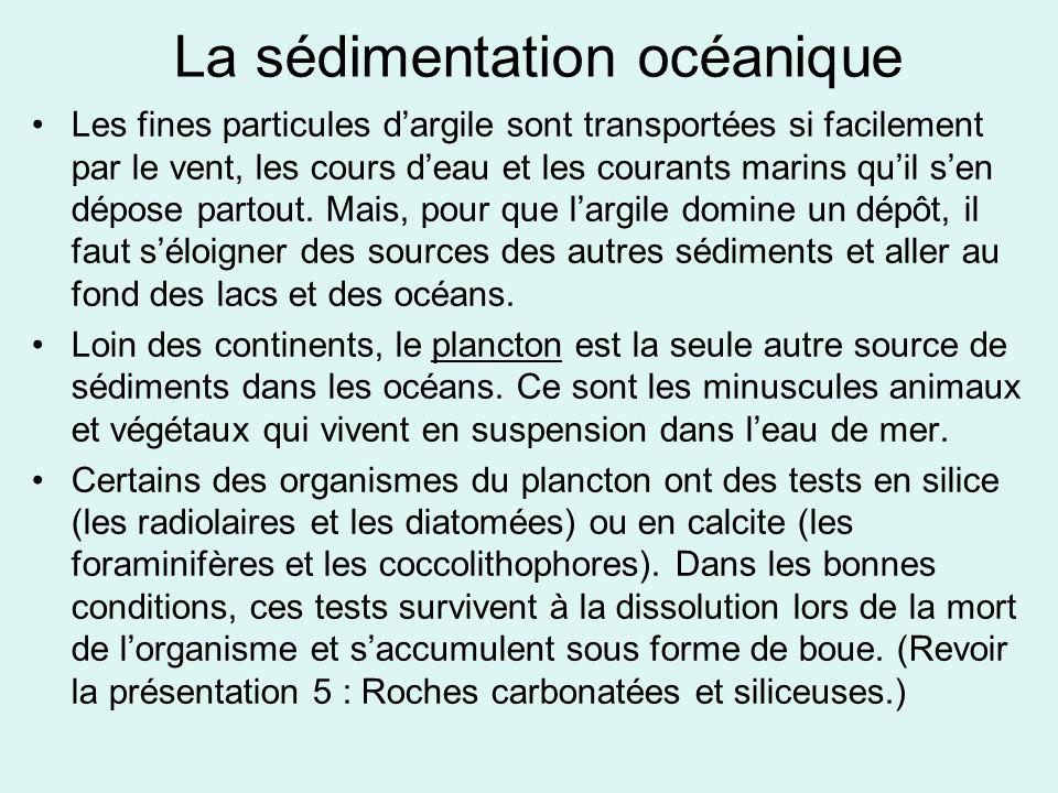 La sédimentation océanique Les fines particules d'argile sont transportées si facilement par le vent, les cours d'eau et les courants marins qu'il s'e