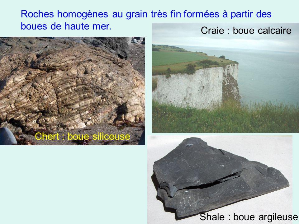 Roches homogènes au grain très fin formées à partir des boues de haute mer. Chert : boue siliceuse Craie : boue calcaire Shale : boue argileuse