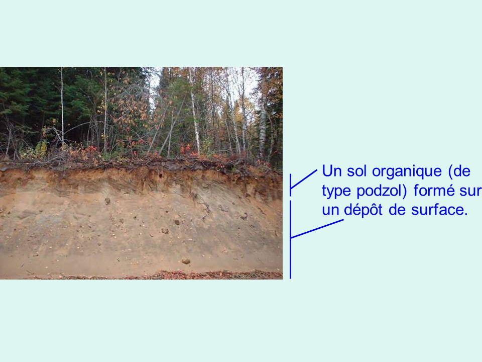 Un sol organique (de type podzol) formé sur un dépôt de surface.
