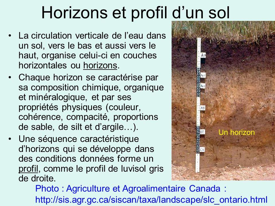 Horizons et profil d'un sol La circulation verticale de l'eau dans un sol, vers le bas et aussi vers le haut, organise celui-ci en couches horizontale