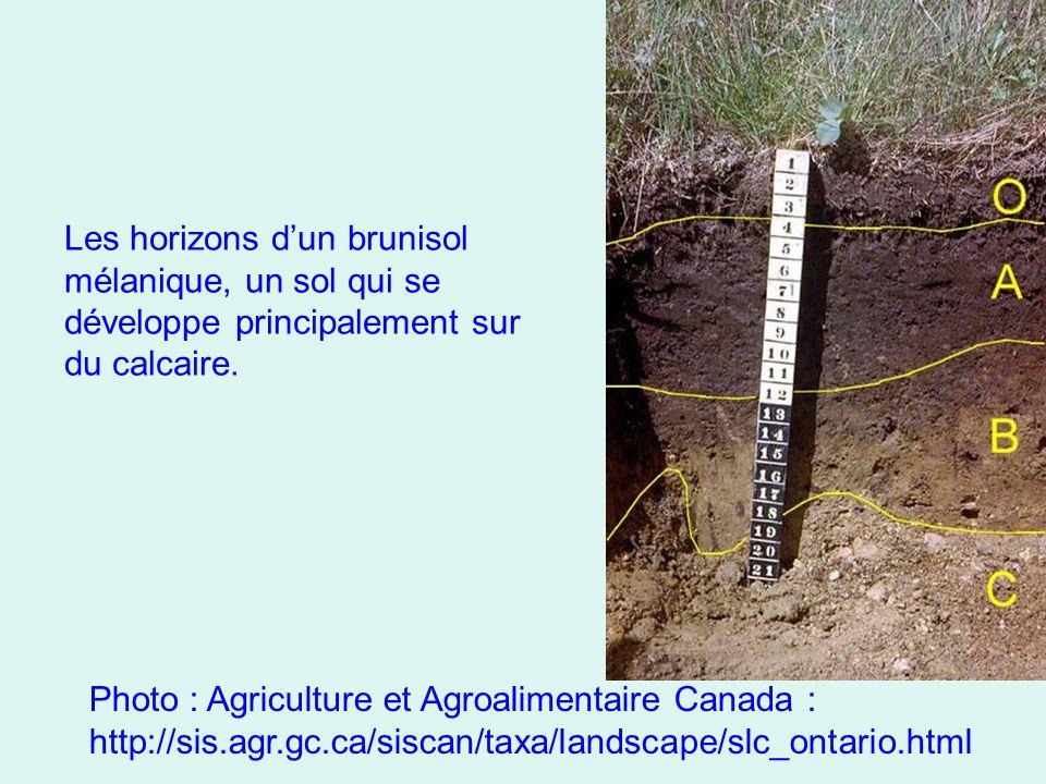 Les horizons d'un brunisol mélanique, un sol qui se développe principalement sur du calcaire. Photo : Agriculture et Agroalimentaire Canada : http://s