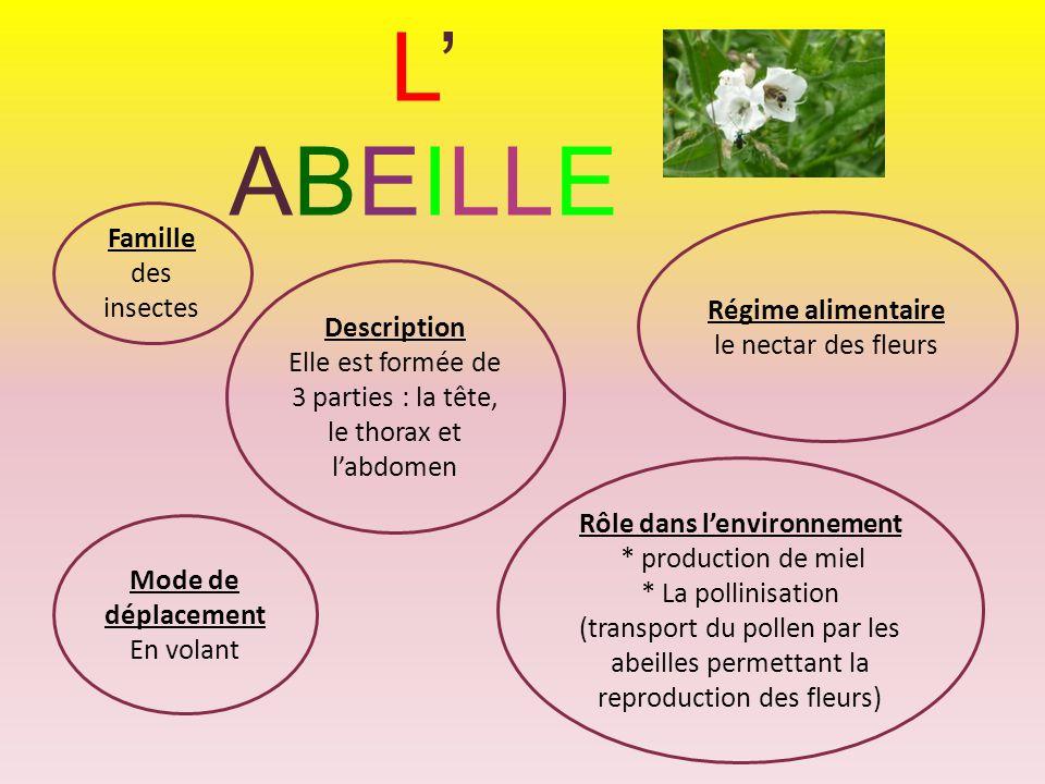 L' ABEILLE Famille des insectes Régime alimentaire le nectar des fleurs Description Elle est formée de 3 parties : la tête, le thorax et l'abdomen Mod