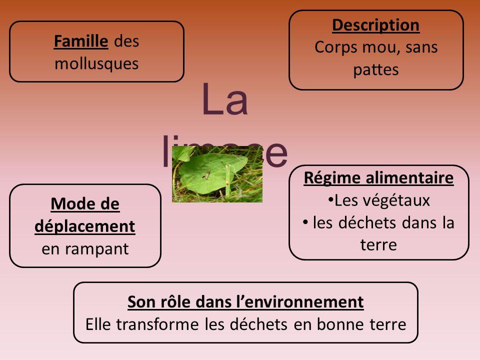 La limace Famille des mollusques Description Corps mou, sans pattes Régime alimentaire Les végétaux les déchets dans la terre Mode de déplacement en r