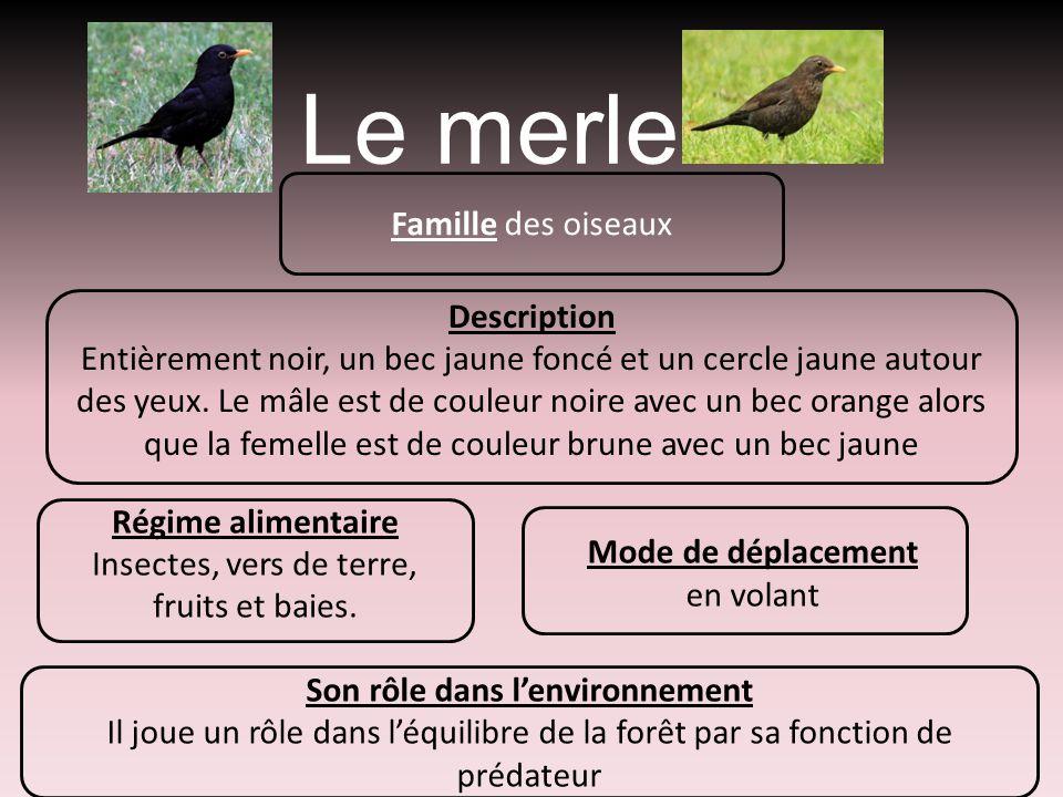 Le merle Famille des oiseaux Description Entièrement noir, un bec jaune foncé et un cercle jaune autour des yeux. Le mâle est de couleur noire avec un