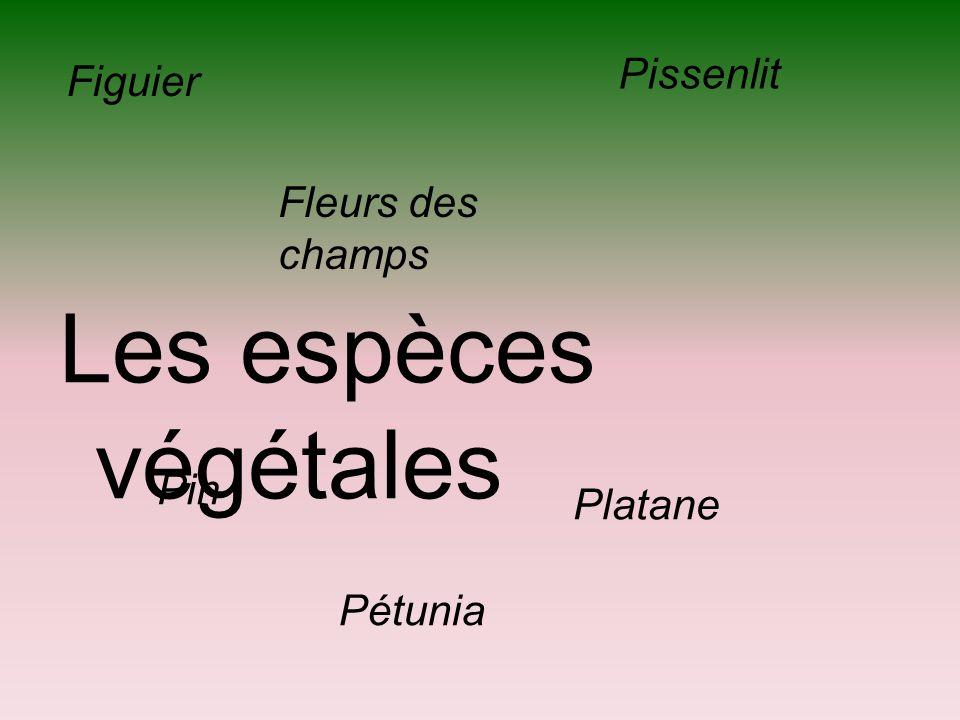 Les espèces végétales Figuier Fleurs des champs Pin Pétunia Pissenlit Platane