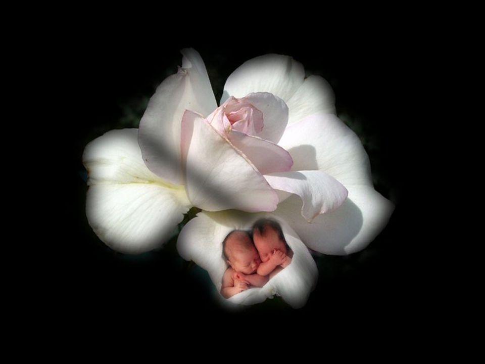 Souvent…on pleure… À la naissance d un enfant, c est la beauté… Devant ce miracle…le cœur est tout chaviré… Souvent…on pleure… Devant la perte subite d un être cher le cœur très effondré… il devient très amer…
