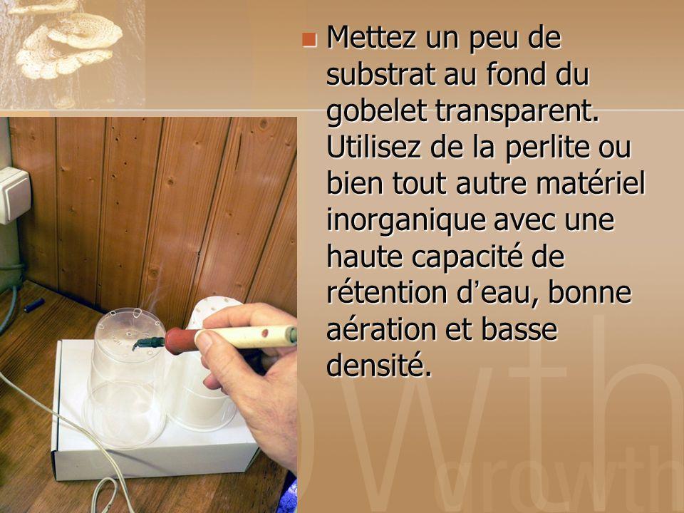 Mettez un peu de substrat au fond du gobelet transparent. Utilisez de la perlite ou bien tout autre matériel inorganique avec une haute capacité de ré