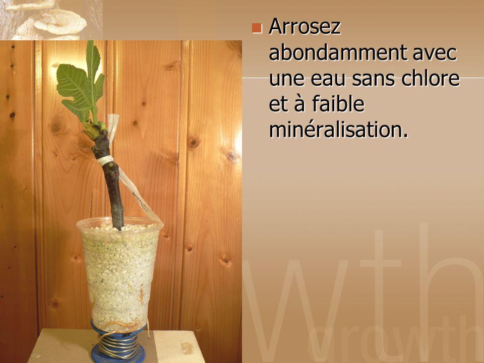 Arrosez abondamment avec une eau sans chlore et à faible minéralisation. Arrosez abondamment avec une eau sans chlore et à faible minéralisation.