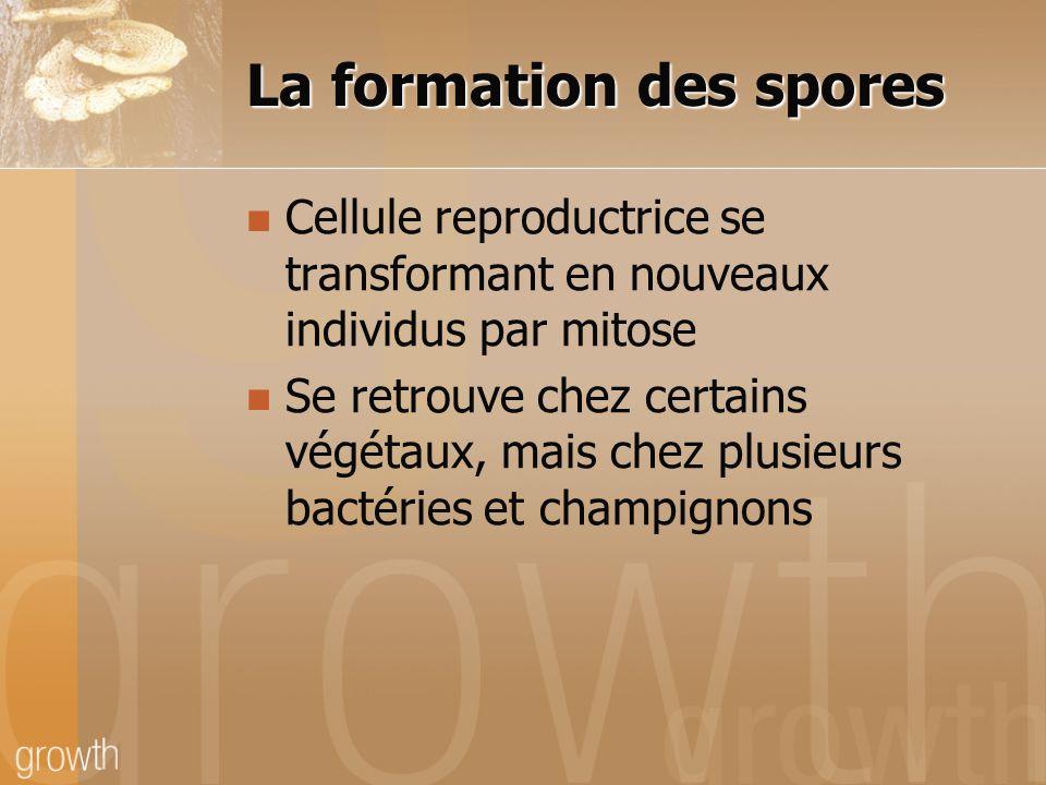 La formation des spores Cellule reproductrice se transformant en nouveaux individus par mitose Se retrouve chez certains végétaux, mais chez plusieurs