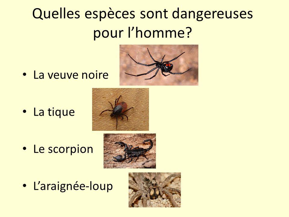 Quelles espèces sont dangereuses pour l'homme? La veuve noire La tique Le scorpion L'araignée-loup