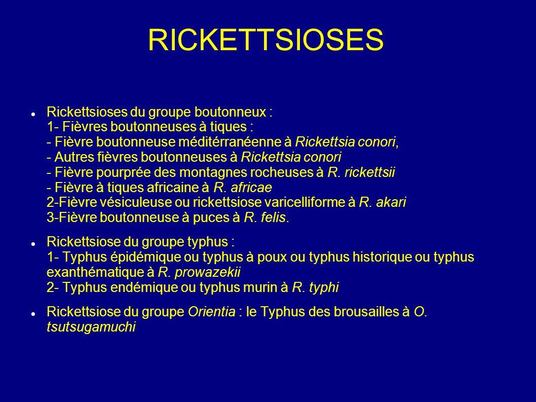 Rickettsioses du groupe boutonneux : 1- Fièvres boutonneuses à tiques : - Fièvre boutonneuse méditérranéenne à Rickettsia conori, - Autres fièvres boutonneuses à Rickettsia conori - Fièvre pourprée des montagnes rocheuses à R.