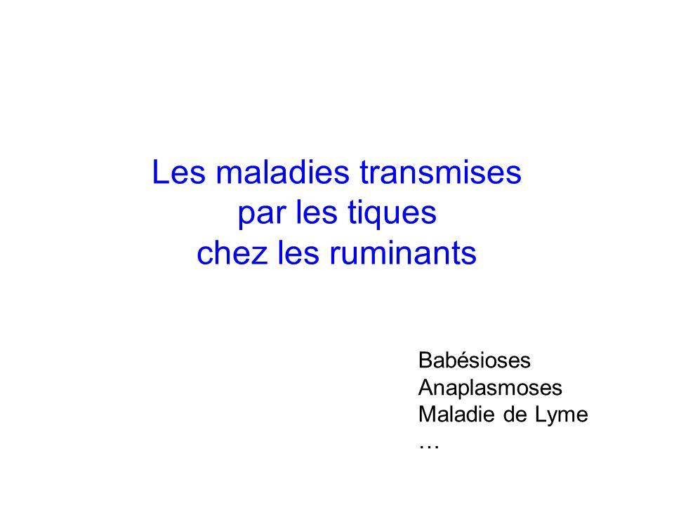 Les maladies transmises par les tiques chez les ruminants Babésioses Anaplasmoses Maladie de Lyme …