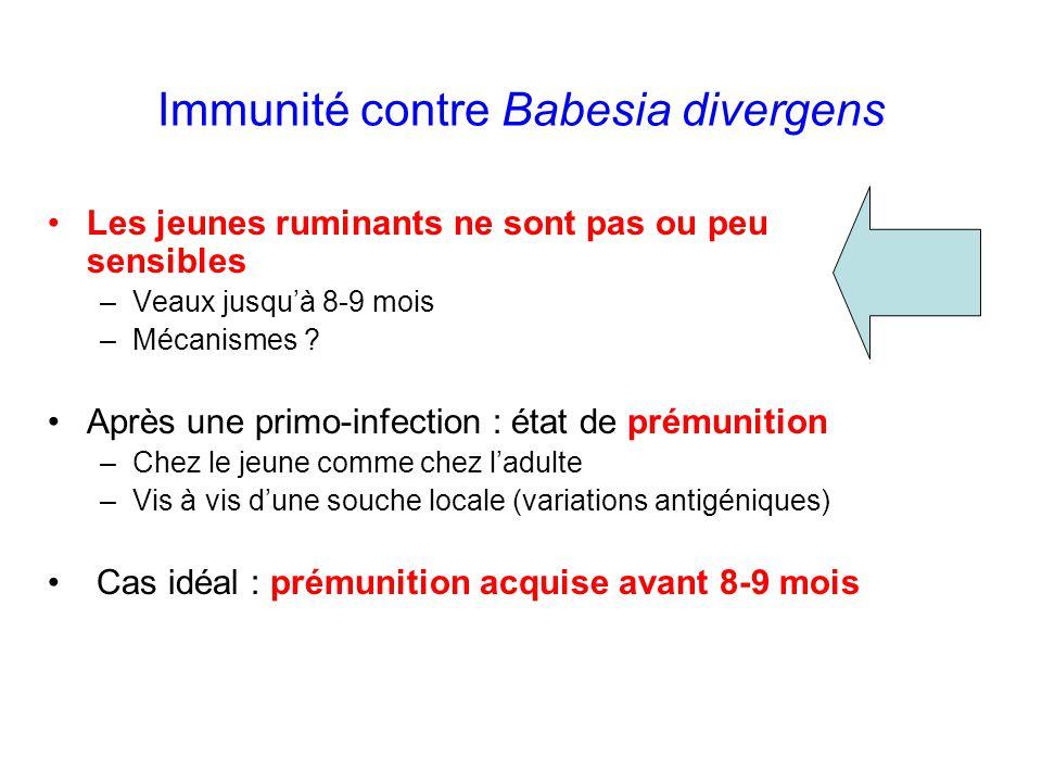 Immunité contre Babesia divergens Les jeunes ruminants ne sont pas ou peu sensibles –Veaux jusqu'à 8-9 mois –Mécanismes ? Après une primo-infection :