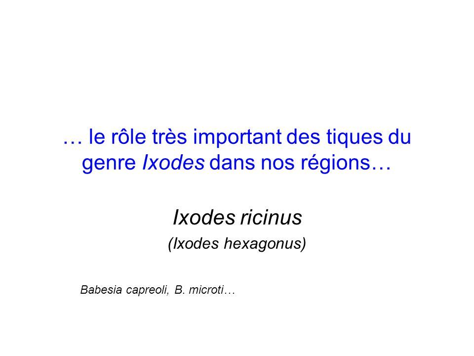 … le rôle très important des tiques du genre Ixodes dans nos régions… Ixodes ricinus (Ixodes hexagonus) Babesia capreoli, B. microti…
