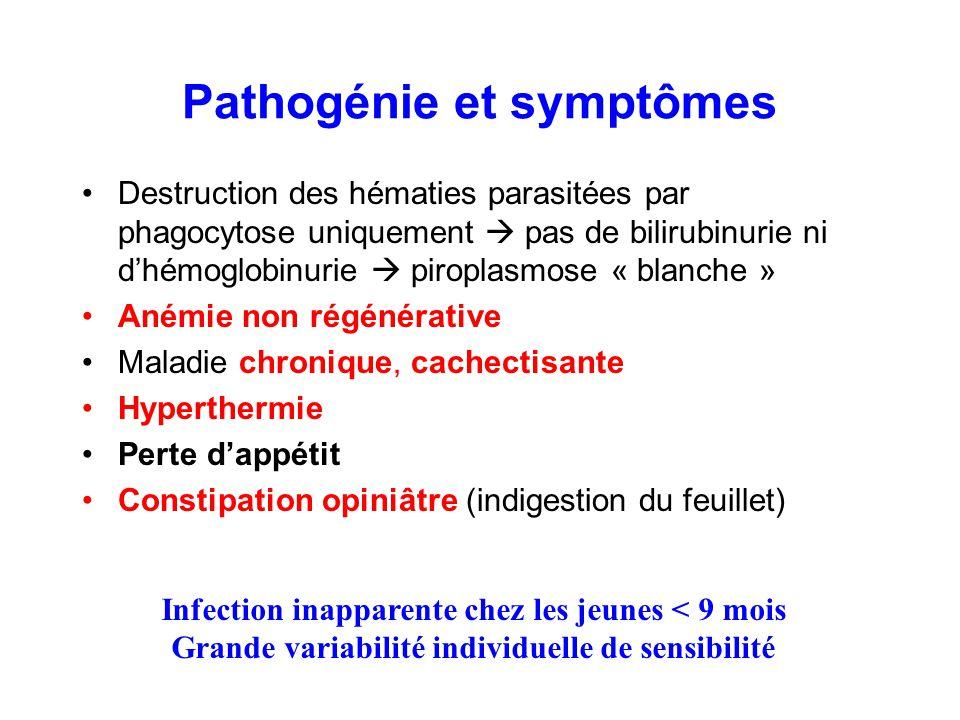 Pathogénie et symptômes Destruction des hématies parasitées par phagocytose uniquement  pas de bilirubinurie ni d'hémoglobinurie  piroplasmose « bla