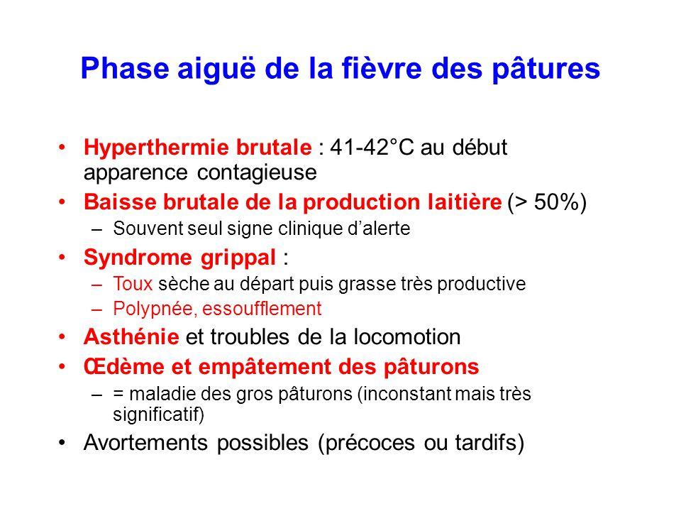 Phase aiguë de la fièvre des pâtures Hyperthermie brutale : 41-42°C au début apparence contagieuse Baisse brutale de la production laitière (> 50%) –S