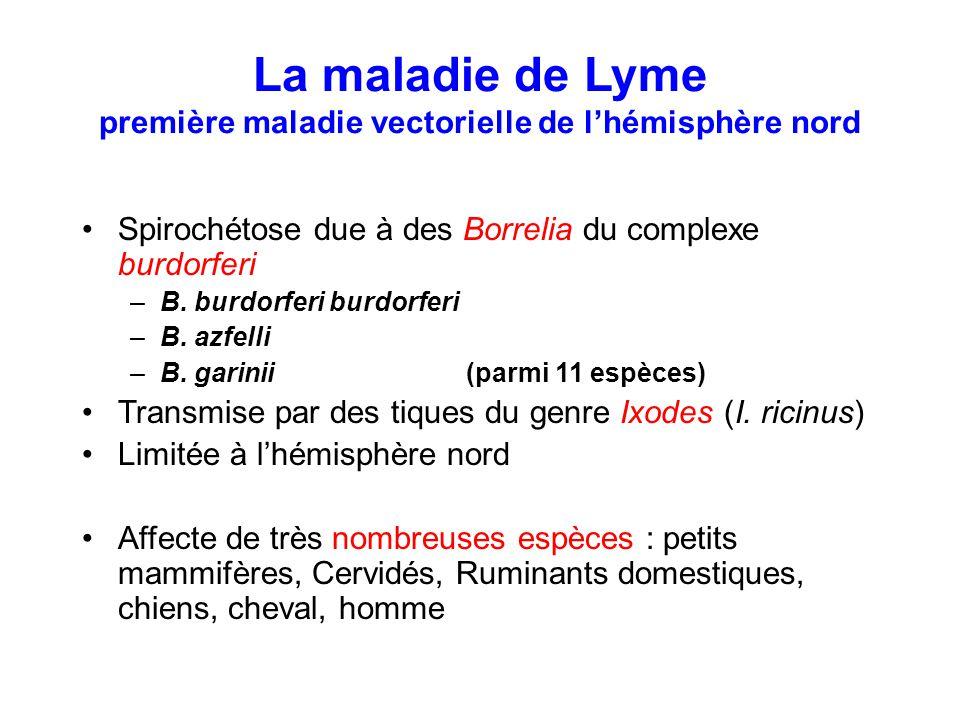 La maladie de Lyme première maladie vectorielle de l'hémisphère nord Spirochétose due à des Borrelia du complexe burdorferi –B. burdorferi burdorferi