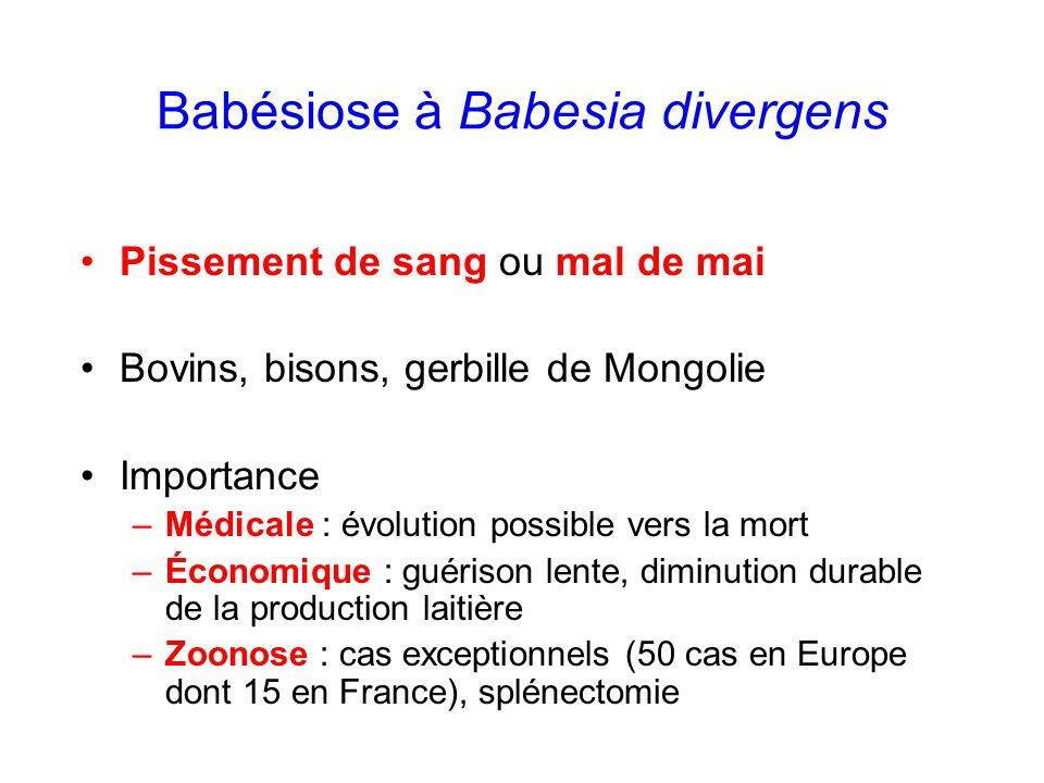 Babésiose à Babesia divergens Pissement de sang ou mal de mai Bovins, bisons, gerbille de Mongolie Importance –Médicale : évolution possible vers la m