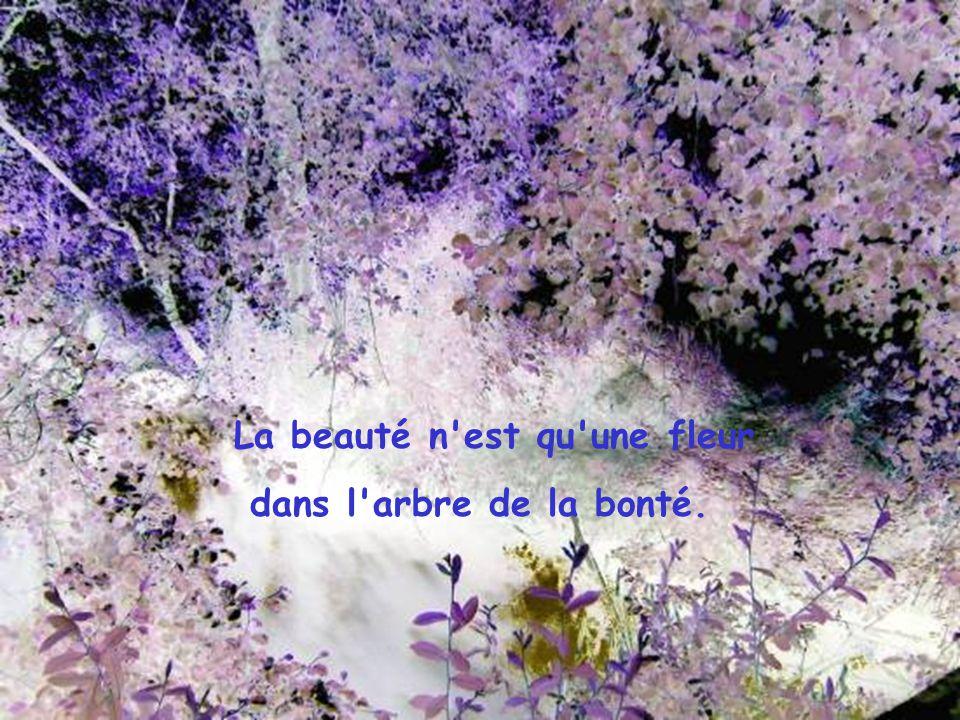 La beauté n est qu une fleur dans l arbre de la bonté.