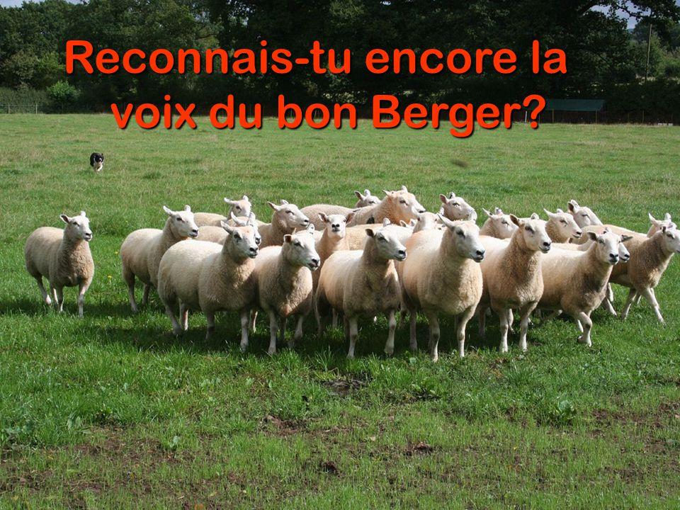 Reconnais-tu encore la voix du bon Berger?