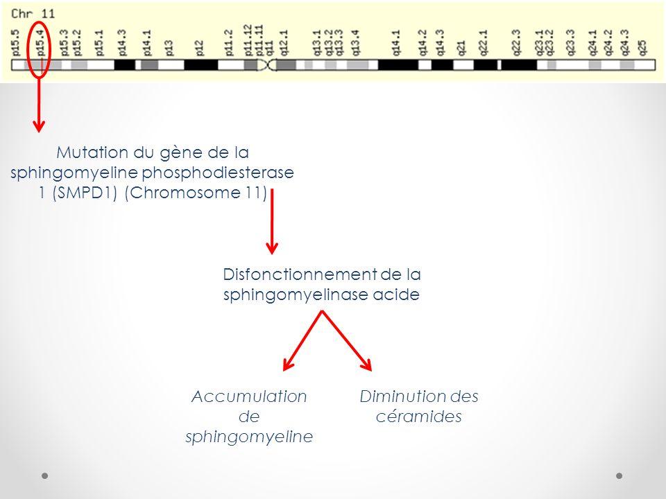 Mutation du gène de la sphingomyeline phosphodiesterase 1 (SMPD1) (Chromosome 11) Disfonctionnement de la sphingomyelinase acide Accumulation de sphingomyeline Diminution des céramides