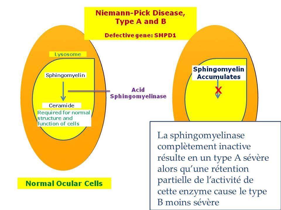 Niemann-Pick C1 Niemann-Pick C2 Les 2 protéines sont impliquées dans le transport du cholestérol et des lipides A l'etat normal
