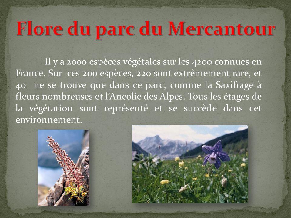Le parc du Mercantour possède des cerfs, des sangliers, des chevreuils, des chamois ( soit plus de 8 000 individus), des bouquetins ( soit 1 100 indiv