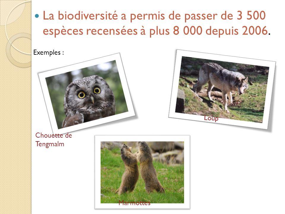 La biodiversité a permis de passer de 3 500 espèces recensées à plus 8 000 depuis 2006. Exemples : Chouette de Tengmalm Loup Marmottes