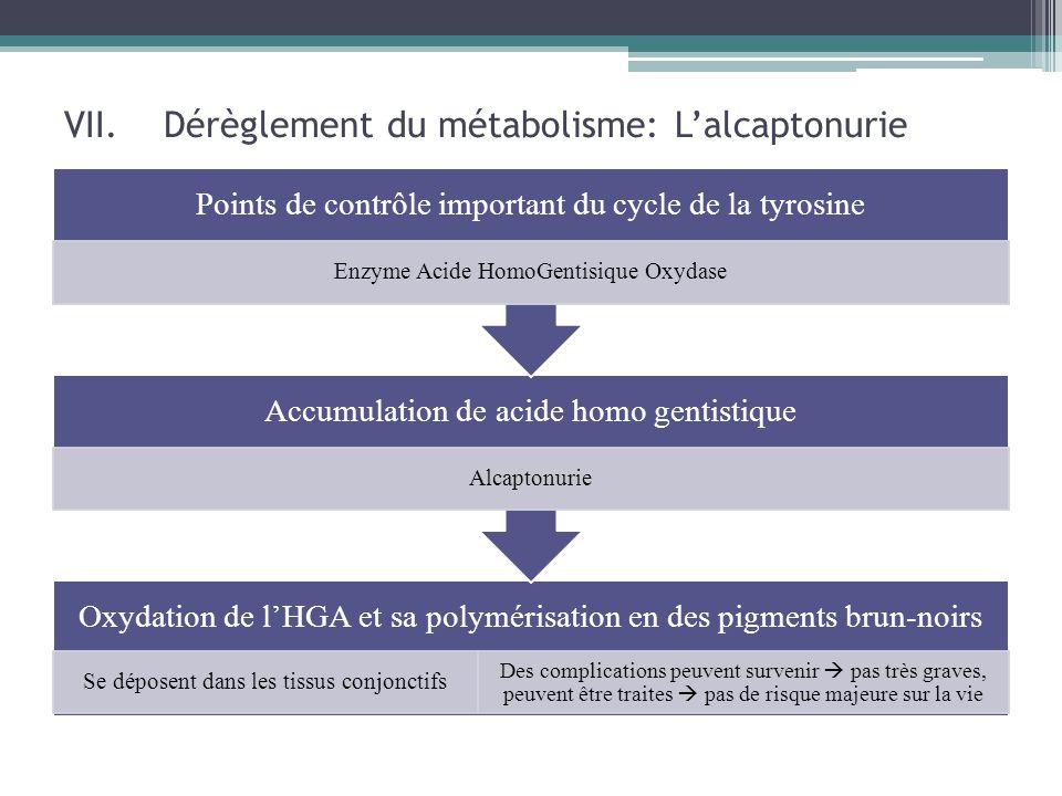 VII.Dérèglement du métabolisme: L'alcaptonurie Oxydation de l'HGA et sa polymérisation en des pigments brun-noirs Se déposent dans les tissus conjonct