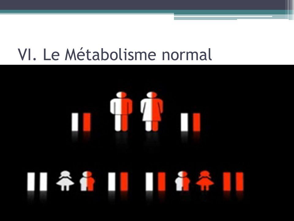 VI. Le Métabolisme normal