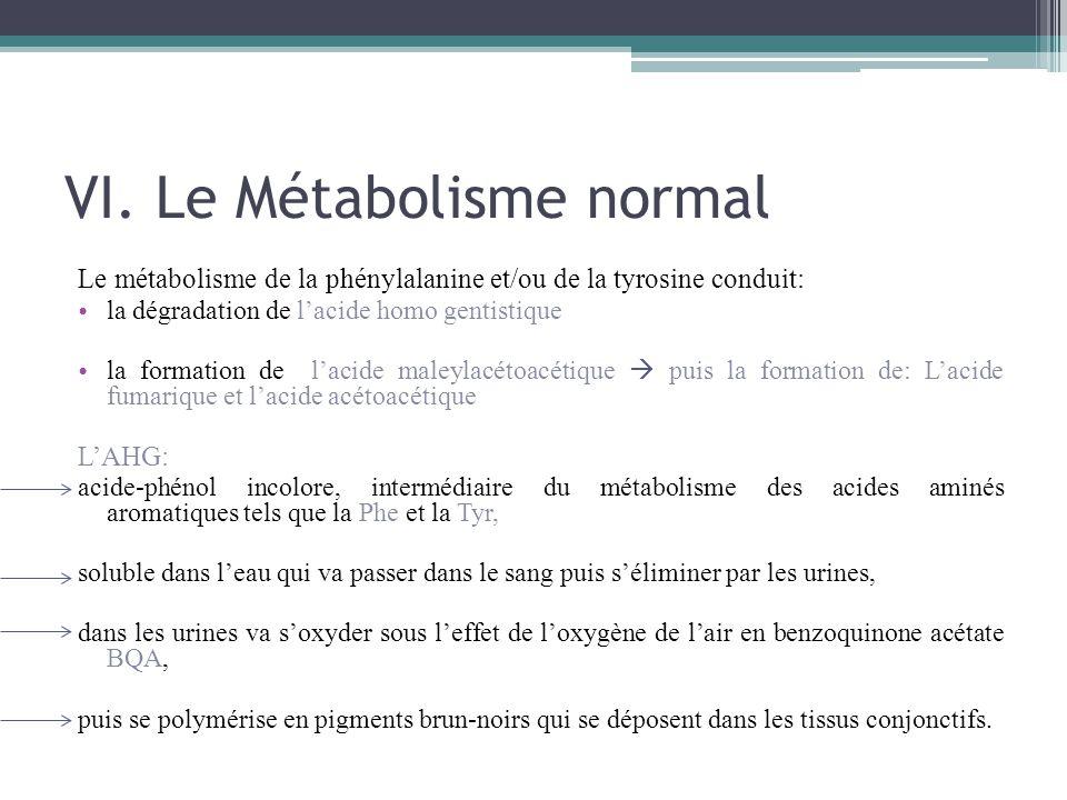 Le métabolisme de la phénylalanine et/ou de la tyrosine conduit: la dégradation de l'acide homo gentistique la formation de l'acide maleylacétoacétiqu