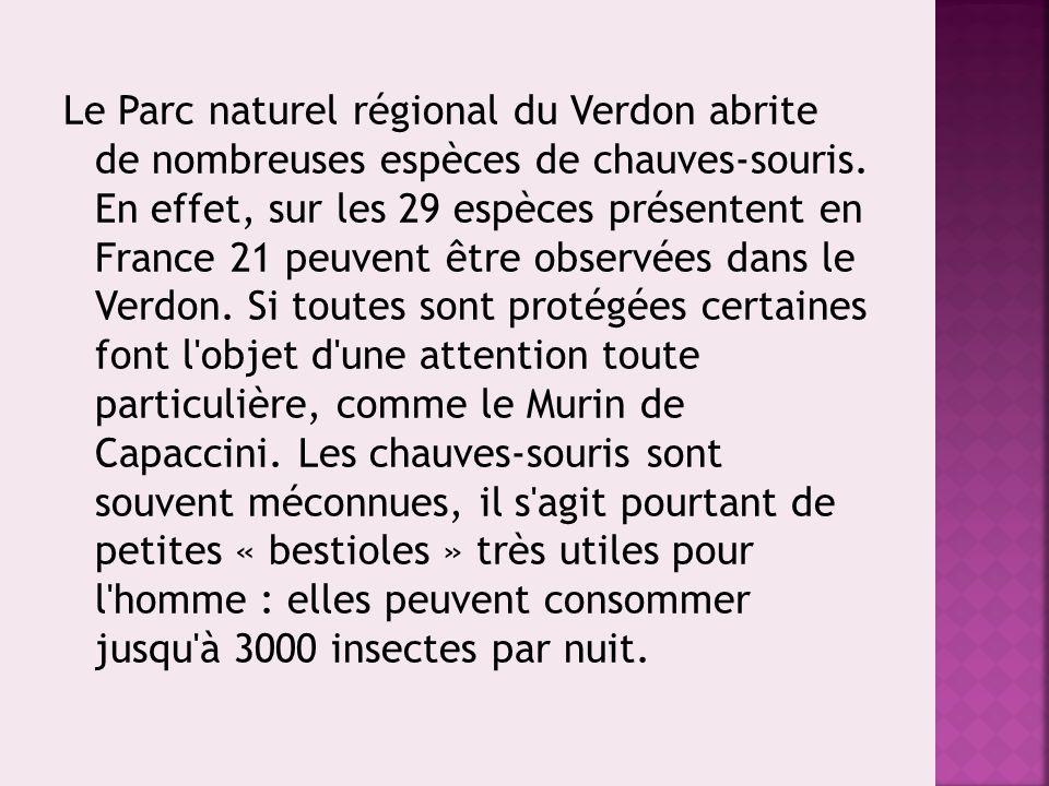 Le Parc naturel régional du Verdon abrite de nombreuses espèces de chauves-souris. En effet, sur les 29 espèces présentent en France 21 peuvent être o