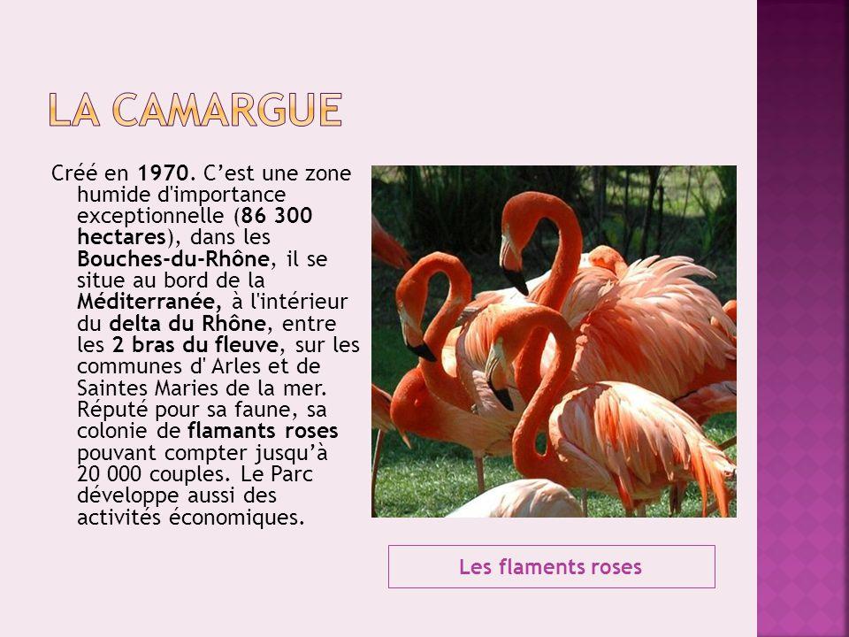 Les flaments roses Créé en 1970. C'est une zone humide d'importance exceptionnelle (86 300 hectares), dans les Bouches-du-Rhône, il se situe au bord d